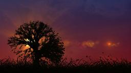 Beautiful summer sunset nature scrolling landscape Animation
