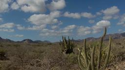 cactus desert baja california sur mexico Footage