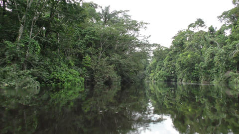 Amazonian jungle river Footage