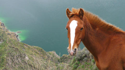 Wild horse close up Footage