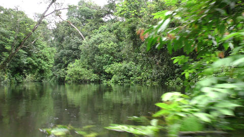 Dense Amazonian vegetation Footage