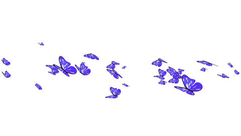 Butterflies 05 Animation