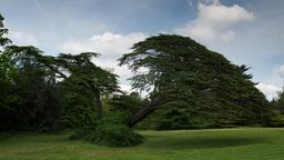beautiful tree english countryside field Footage