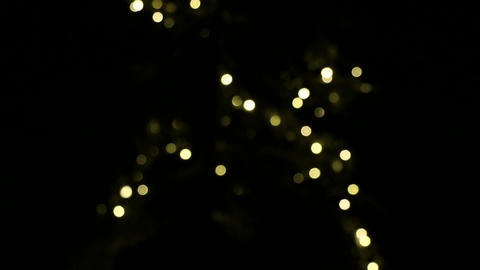 Racking focus shot of outdoor Christmas lights on a spruce tree Live Action
