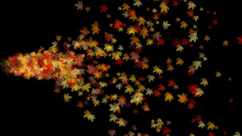 4k Maple leaf leave falling&flare light,autumn fall romantic particle artist Footage