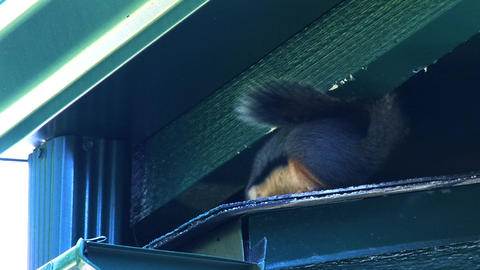 Squirrels Live Action