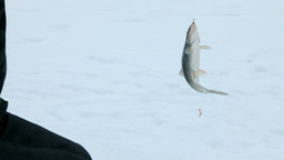 ice fishing Stock Video Footage