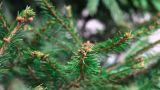 Pine stock footage