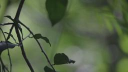 forest jungle vegetation change focus Footage