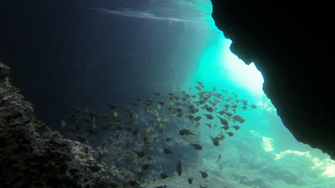 Slow Motion Shot Of A School Sweeper Fish Swimming Below Rocks In Dramatic Light stock footage