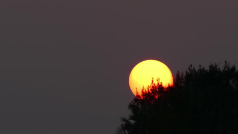 large sun sets behind tree - telephoto timelapse Footage