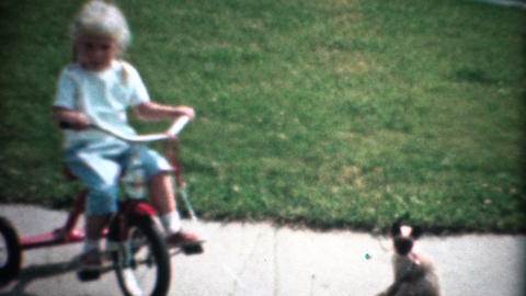 (8mm Vintage) Cat Tied to a Tricycle Footage