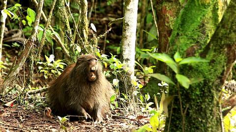 Capybara Live Action