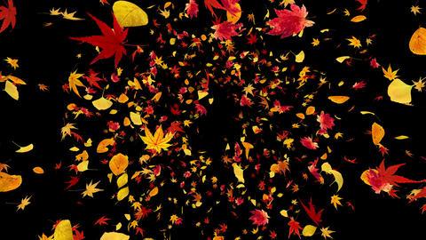 Autumn Leaf front Ab 4 K Animation