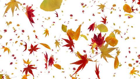 Autumn Leaf tornado Aw 4 K Animation