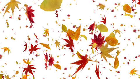 Autumn Leaf tornado Cw 4 K Animation