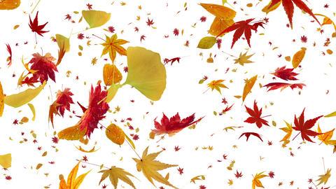 Autumn Leaf tornado Dw 4 K Animation