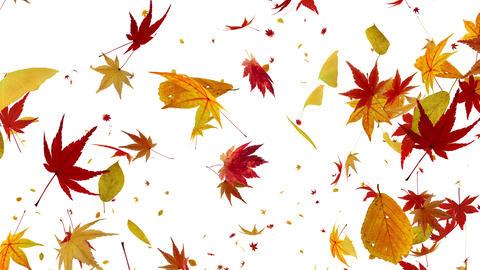 Autumn Leaf tornado G 2w 2 4 K Animation