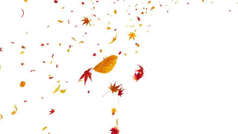 Autumn Leaf tornado Jb 4 K Animation