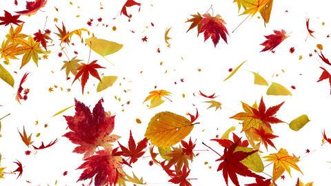 Autumn Leaf tornado Gw 2 4 K Animation