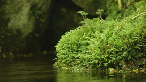 UHD/HD 清流 苔 moss and water Footage