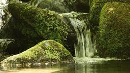 4 K_UHD 苔 小さな滝 Moss, Small_waterfall stock footage