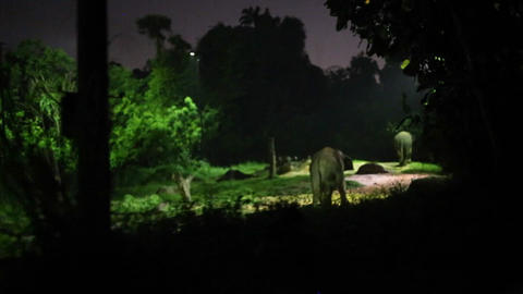 singapore night safari - african elephants Footage