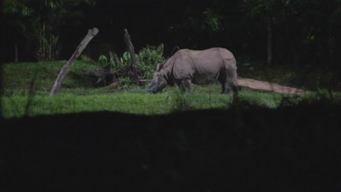 singapore night safari - indian rhinoceros Footage