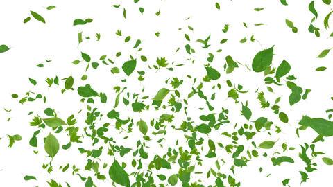 Green Leaf fountain B 4 K Animation