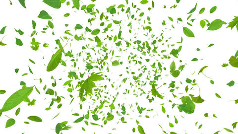 Green Leaf front Aw 4 K Animation