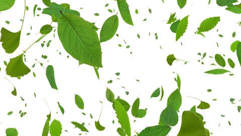 Green Leaf tornado Cw 4 K Animation