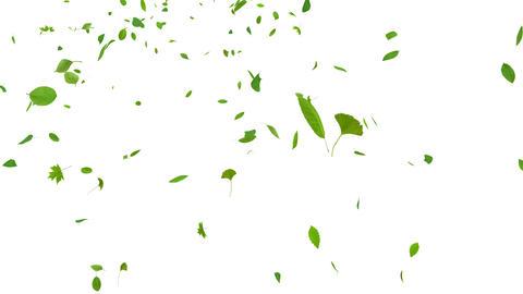 Green Leaf tornado Ja 4 K Animation