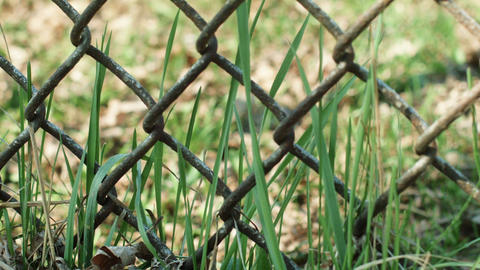 grass in wind behind rusted metal fence Footage
