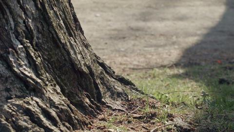 People Footsteps Behind Tree In Park stock footage