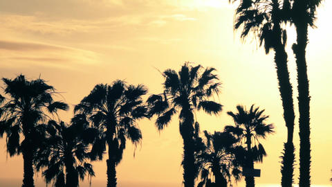 Palm Trees In The Sun Backlighting 2 stock footage
