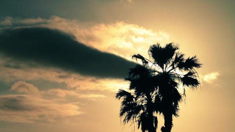 Palm Tree In The Sun Backlighting 2 stock footage