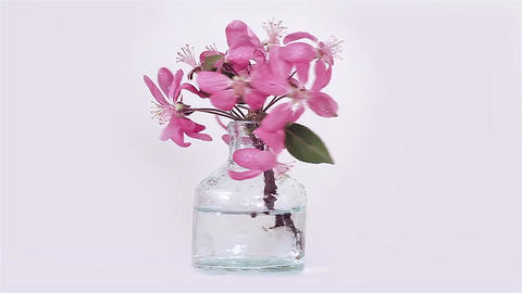 Pink Spring Flowers In A Beautiful Bottle stock footage