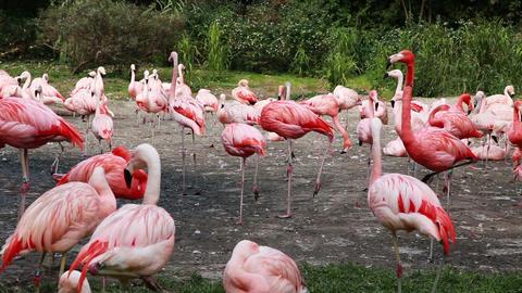 Flaminro Zoo stock footage