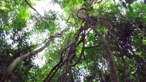 Sun light through jungle trees, steadicam shot Footage