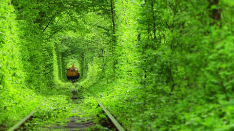 Train in a Green Tunnel of Trees Footage