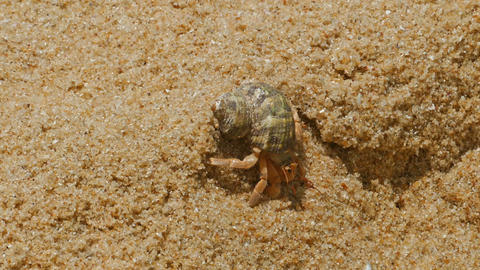hermit crab in the sand close-up Footage