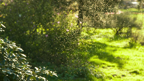 Insects Bask On The Sunlight After Born stock footage