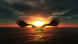Eagle Stock Video Footage