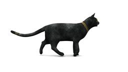 CatWalk Stock Video Footage