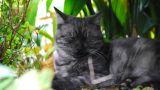 Cat Footage