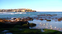 Australia Ocean Stock Video Footage