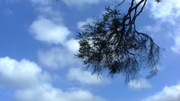 Australia Sky Stock Video Footage