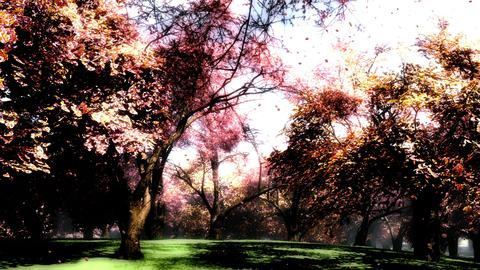 Japanese Garden 09 falling petals Stock Video Footage