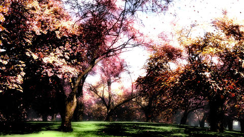 Japanese Garden 09 falling petals Animation