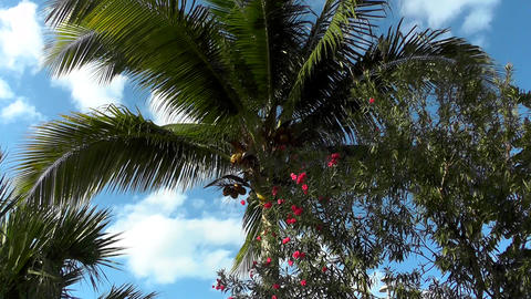 Coconut Palm Tree Against The Sky With Clouds stock footage